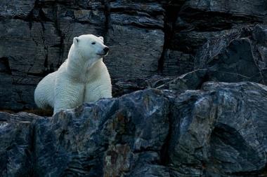 Ours dans les rochers