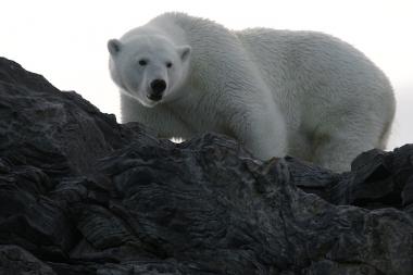 Un ours dans les falaises...